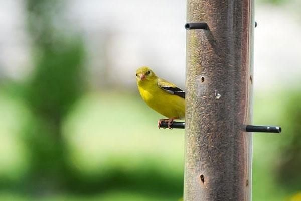 wild birds header