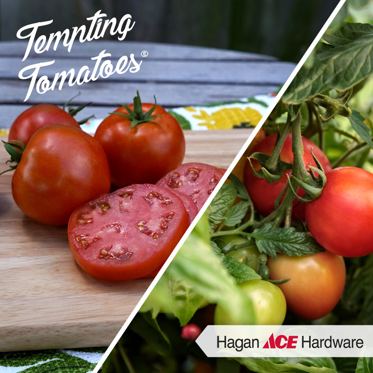 8G Proven Harvest Tempting Tomatoes