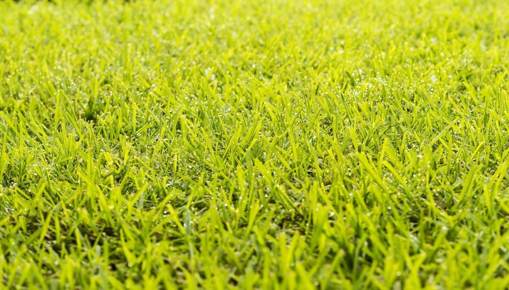 lawn dew drops PX7VKQF